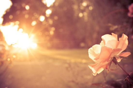 Солнце дарит свет и любовь.