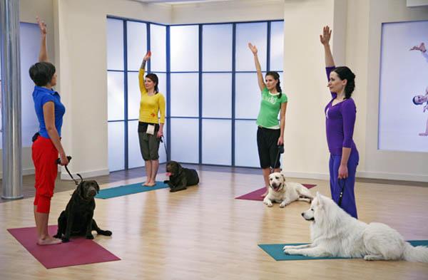Дога-йога, занятие йогой с собакой.
