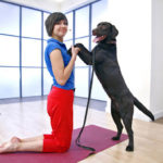 Дога-йога или человек собаке друг